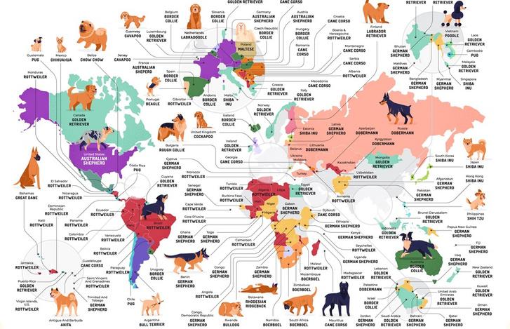 Фото №4 - Карта: Самые популярные породы собак в каждой стране мира