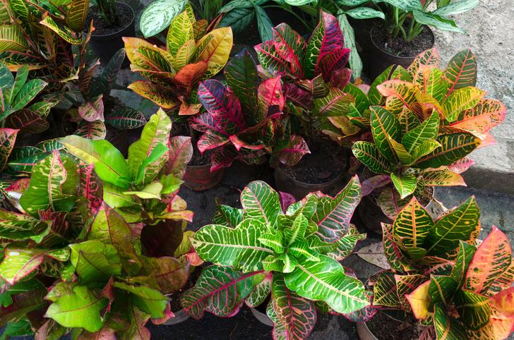 Фото №10 - Комнатные растения, которые помогут пережить сезон простуд