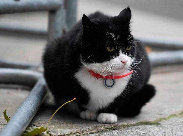 Фото №7 - Коты на службе Ее Величества