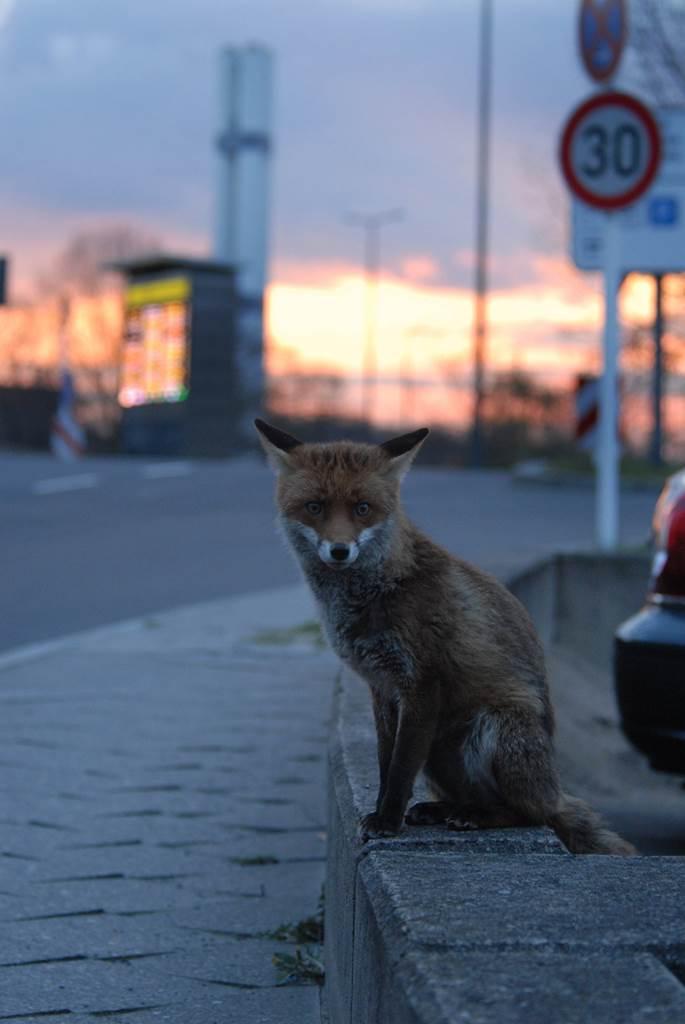Фото №1 - Как деятельность человека влияет на жизнь млекопитающих