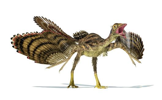 Фото №1 - Мог ли археоптерикс летать