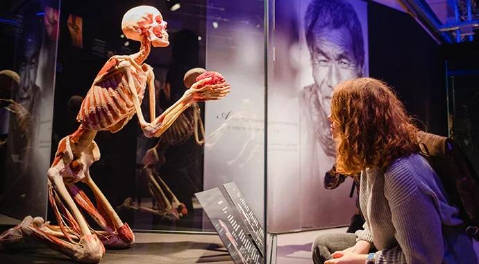 Выставка «BODY WORLDS»: 5 способов принять свое тело