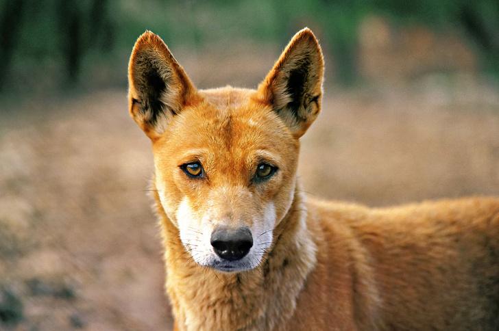 Фото №1 - Собаки с волчьим билетом