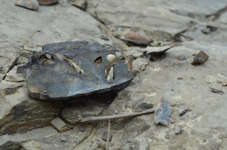 Фото №1 - Живые организмы способны разрушать камни
