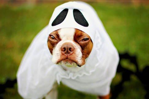 Фото №22 - Фотоподборка недели: собаки, которые уже готовы к Хэллоуину