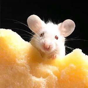 Фото №1 - Стройные мыши