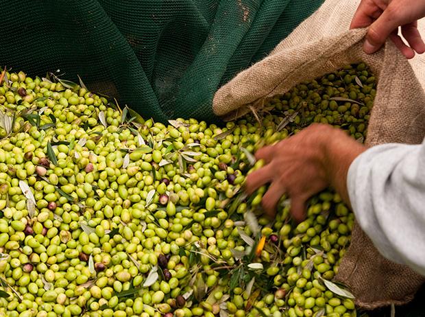 Фото №3 - Секреты выбора и хранения оливкового масла от греческих экспертов