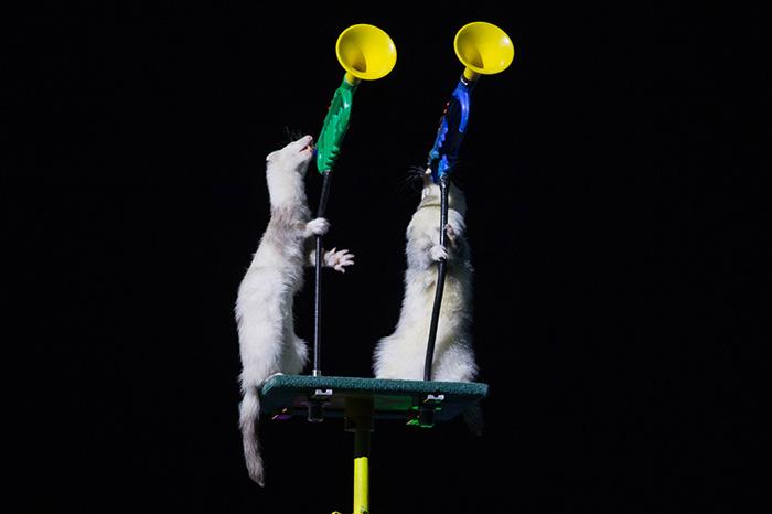 Фото №5 - «Снежный Дракон» в цирке «Аквамарин»