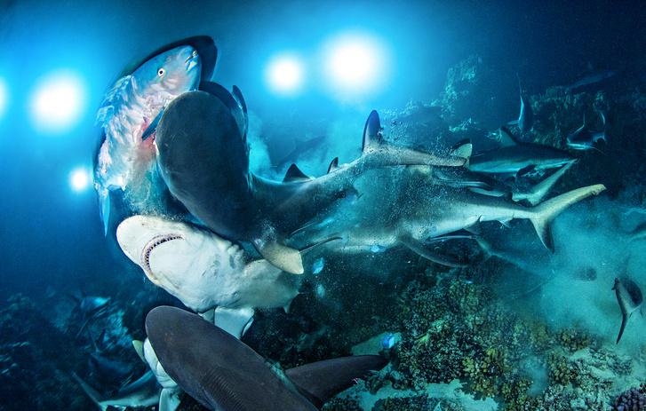 Фото №1 - Бездна: тайны глубин