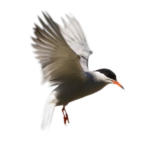 Фото №13 - Вольные мигранты: куда пропадают птицы зимой