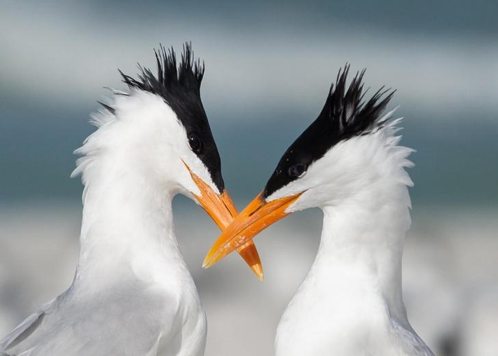 Фото №1 - Влюбленная пара