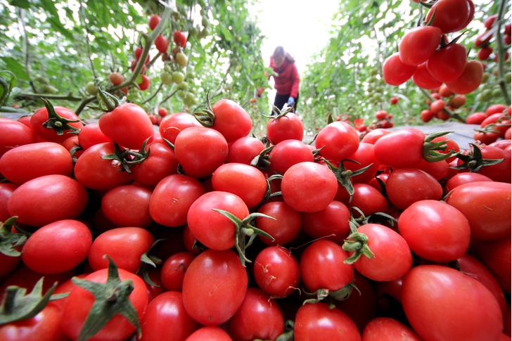 Фото №1 - Названа польза потребления томатов