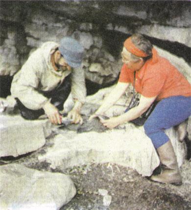 Тупик — один из представителей пернатых, гнездящихся на Айновых островах.
