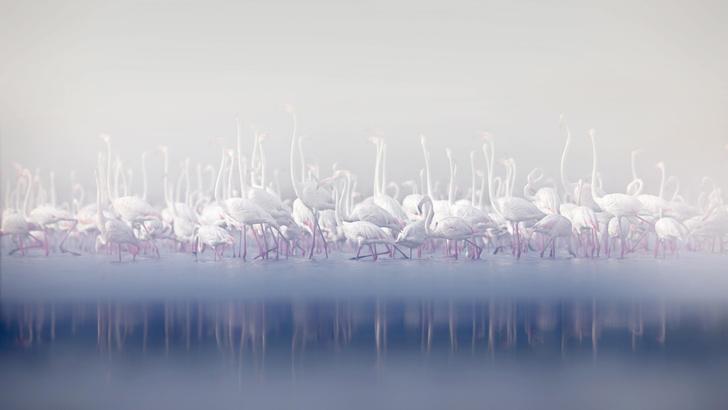 Фото №1 - Море фламинго