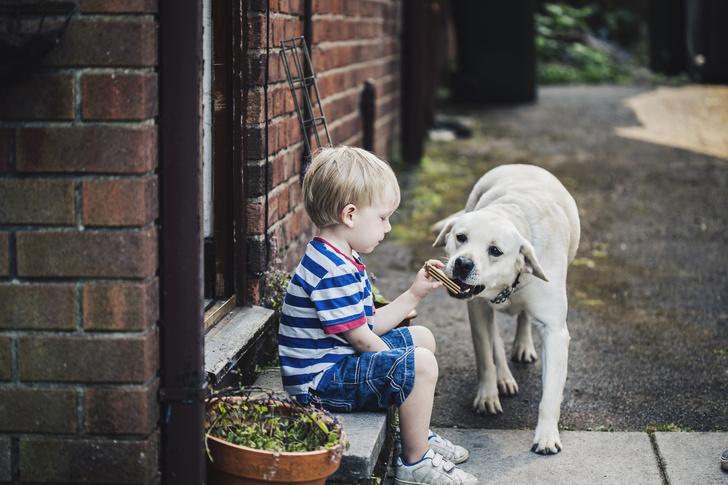 Фото №1 - Как собаки защищают детей от болезней