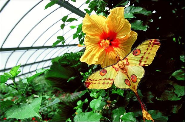 Фото №6 - 10 бабочек, крылья которых похожи на полотна импрессионистов