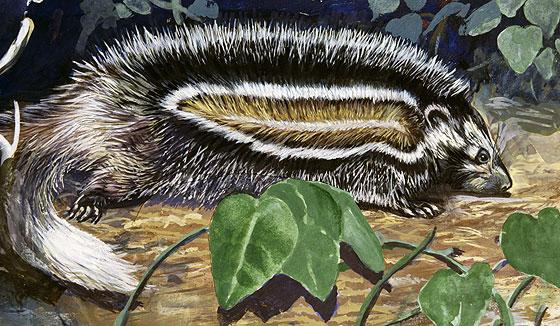 Фото №4 - Гаитянский щелезуб и еще 3 ядовитые «ошибки природы»