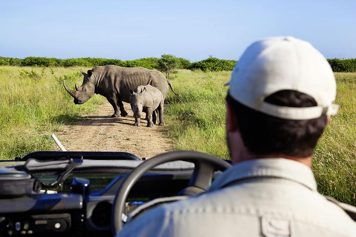 Фото №8 - Язык слонов и львов: словарь рейнджера ЮАР