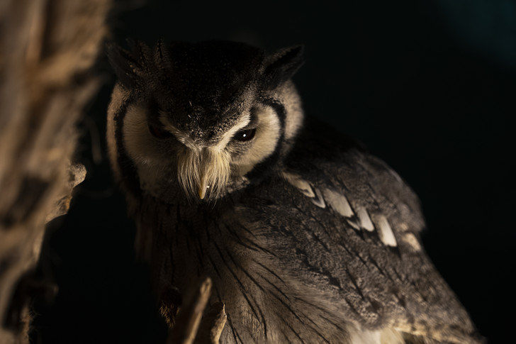 Фото №1 - Властелины ночи: почему совы не то, чем кажутся?