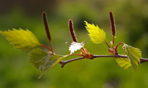 Фото №1 - Назван фактор, который весной может спровоцировать рост заболеваемости COVID-19