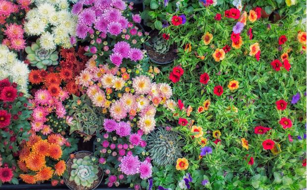 Фото №4 - 20 растений, которые отпугивают вредителей с грядок