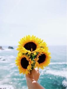 Фото №1 - Тест: Выбери цветок, и мы угадаем, какого цвета у тебя глаза