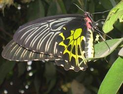Фото №4 - Налет на бабочек в Камбодже