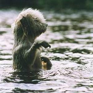 Фото №1 - В Петербурге с дрейфующей льдины сняли собаку