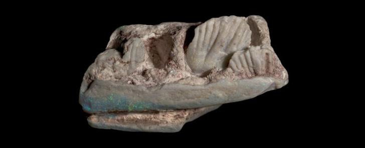 Фото №1 - В Австралии обнаружили новый вид динозавров размером с собаку
