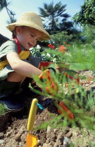 Фото №2 - Во саду ли, в огороде