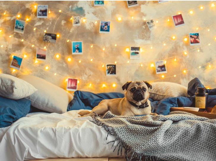 Фото №4 - Декор стен в квартире: 5 необычных идей