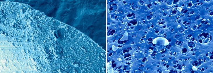 Фото №4 - « Микробы могут годами летать вокруг света»
