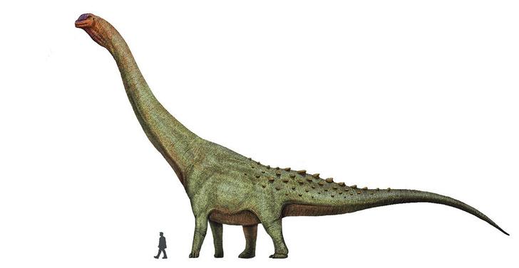 Фото №1 - В Аргентине обнаружили останки крупнейшего сухопутного динозавра