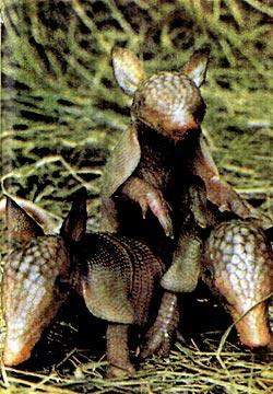 Фото №2 - «Карманные динозавры»