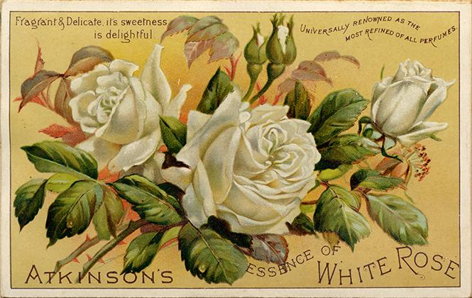 Фото №6 - Розы для Елизаветы и Александры: новое рождение двух королевских ароматов