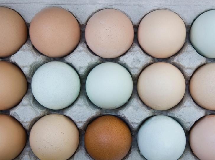 Фото №3 - Как правильно выбирать яйца: полезные советы и интересные факты