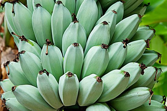 Фото №18 - Рабочий момент: банановый рай