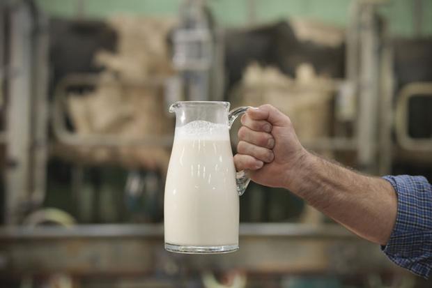 Фото №2 - Пить или не пить: зачем человеку молоко