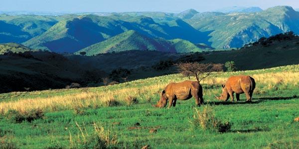 Фото №1 - На «Трабанте» через Африку