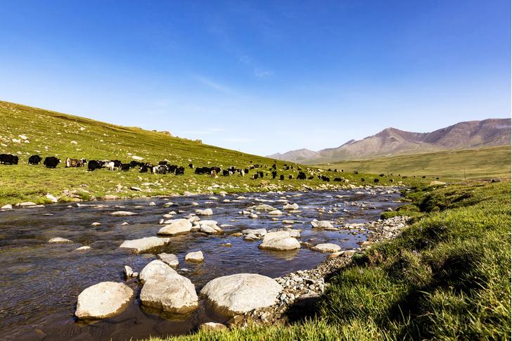 Фото №1 - В какой горной системе можно встретить большое природное разнообразие?