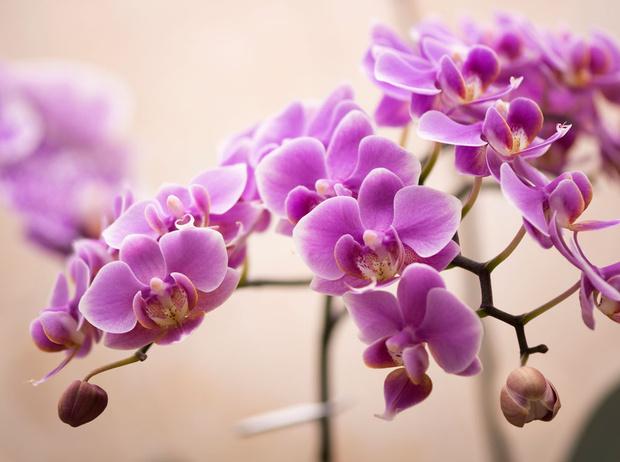 Фото №3 - Мифический цветок: все, что нужно знать об орхидеях