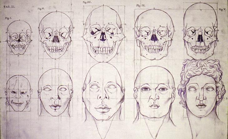 Фото №2 - Как человечество себя из себя выводило: история евгеники