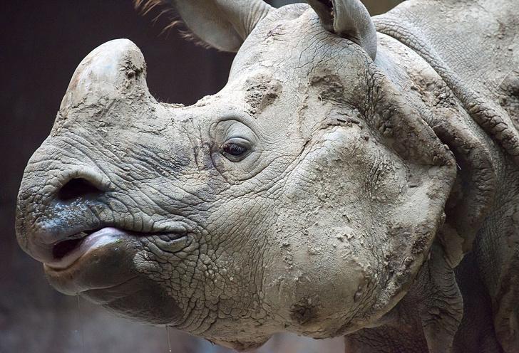 Фото №1 - На грани вымирания: 5 самых редких животных планеты