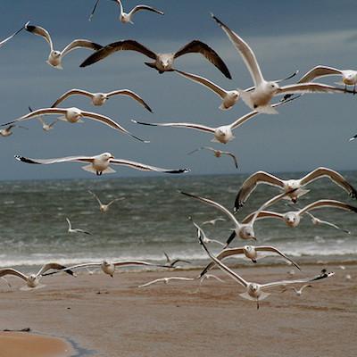 Фото №1 - Потерпевший кораблекрушение рыбак восемь дней питался чайками