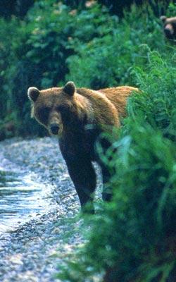 Фото №5 - Медвежья зона