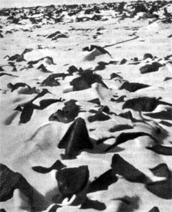 Фото №4 - Пеленги пересекаются над островами