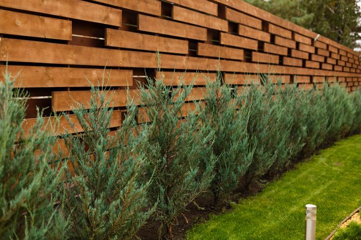 Фото №3 - 6 способов красиво и недорого оформить изгородь на даче