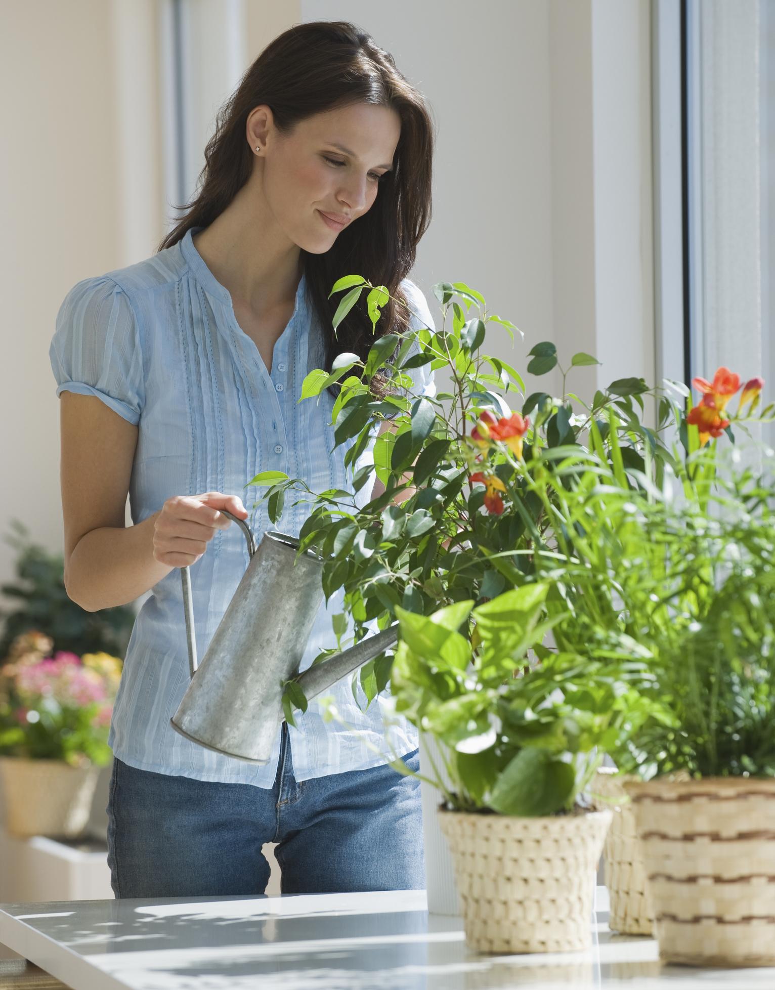 Как уехать в отпуск и не поливать цветы