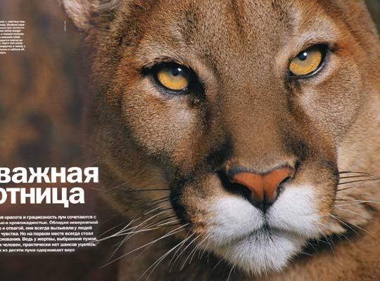 Фото №1 - Отважная охотница