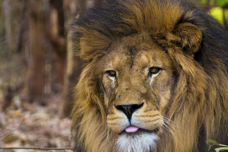 Фото №3 - Дикая природа Малави: как спасают и реабилитируют животных